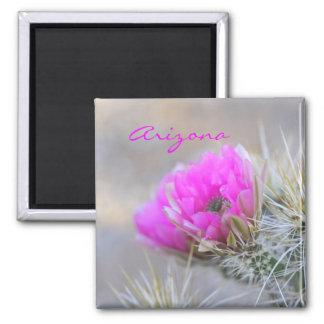 Imã flor cor-de-rosa do cacto, arizona
