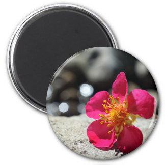 Imã Flor cor-de-rosa do mistério