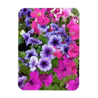 Ímã Flor cor-de-rosa e roxa do petúnia