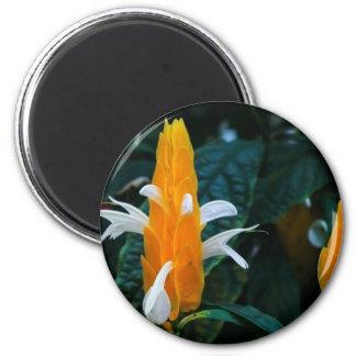 Imã Flor do pirulito