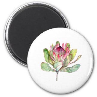 Imã Flor do Protea