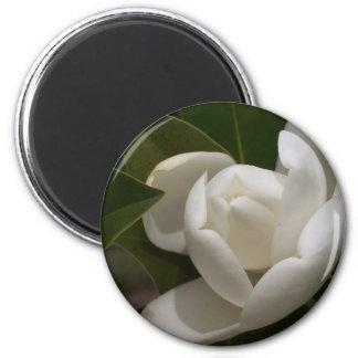 Imã flor em botão branca de magnólia do sul