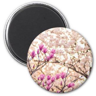 Imã Flor roxa cor-de-rosa de florescência do primavera