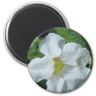 Imã Flor tropical branca encontrada em Fiji