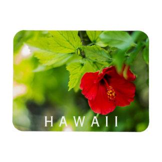 Ímã Flor tropical do hibiscus vermelho de Hanalei