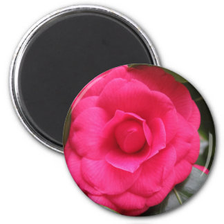 Imã Flor vermelha do japonica Rachele Odero da camélia