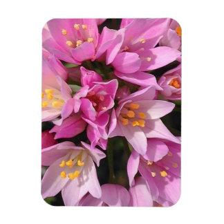 Ímã Flores cor-de-rosa e amarelas tropicais