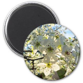 Imã Flores da árvore de cereja de Yoshino