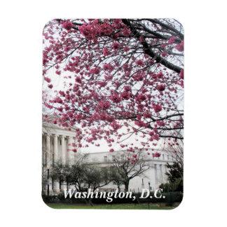 Ímã Flores de cerejeira. Washington, C.C.