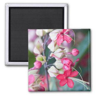 Imã Flores tropicais cor-de-rosa e brancas vermelhas