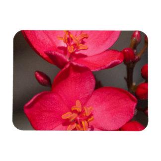 Ímã Flores tropicais vermelhas e cor-de-rosa de Fiji