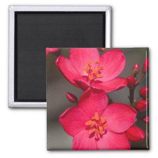 Imã Flores tropicais vermelhas e cor-de-rosa de Fiji