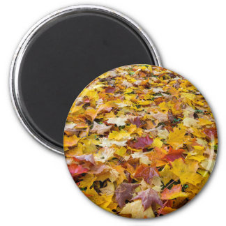 Imã Folhas caídas da cor da queda nos parques mmoídos