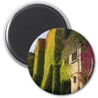 Imã Folhas coloridas em paredes da casa