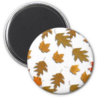 Imã Folhas de bordo do outono