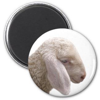 Imã Foto do animal de fazenda dos carneiros