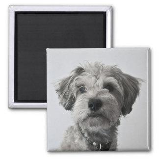 Imã Foto do retrato do filhote de cachorro do