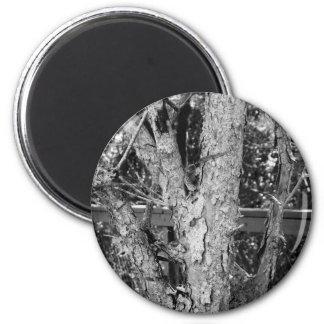 Imã Foto preto e branco da natureza da árvore