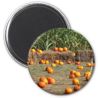 Imã Fotografia da colheita do outono das abóboras, do