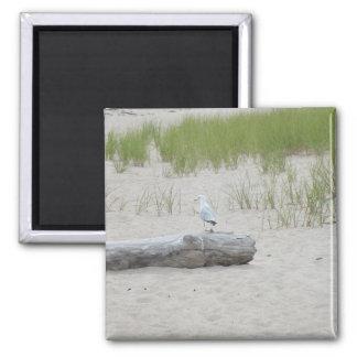 Imã Gaivota que senta-se no ímã da foto da praia do