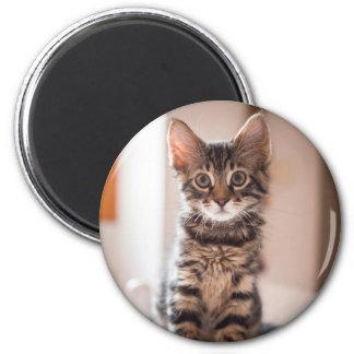 Imã Gatinho do gato malhado na mesa