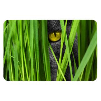 Ímã Gato cinzento que joga o couro cru - e - busca na