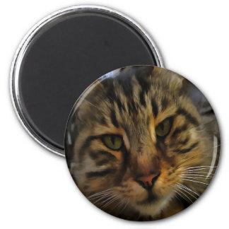 Imã Gato curioso