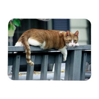 Ímã Gato de gato malhado alaranjado em trilhos azuis