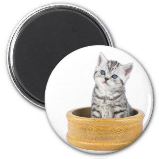 Imã Gato de gato malhado de prata novo que senta-se na