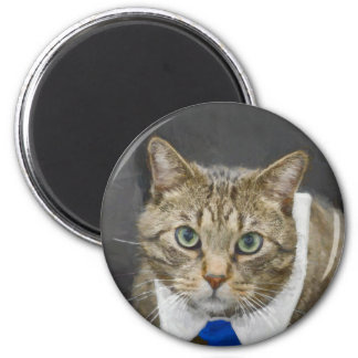 Imã Gato de gato malhado marrom verde-eyed bonito que