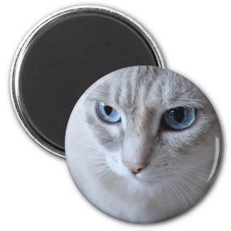 Imã Gato de Kisa dos olhos azuis