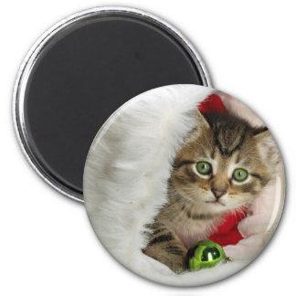 Imã Gato do Natal - gato do gatinho - gatos bonitos