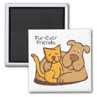 Imã Gato e cão dos amigos | da Pele-Nunca junto