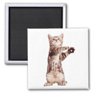 Imã Gato ereto - gatinho - animal de estimação -