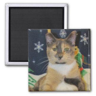 Imã Gato, gatinho, Natal, salvamento, foto