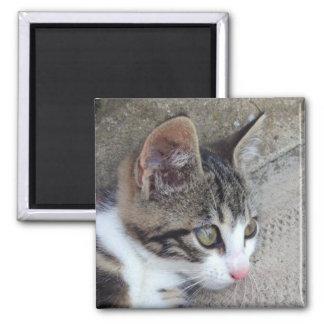 Imã Gato malhado e gatinho branco