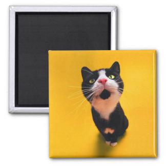 Imã Gato preto e branco do gatinho-animal de estimação