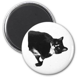 Imã Gato preto e branco que olha acima o entalhe