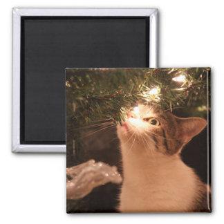 Imã Gatos e luzes - gato do Natal - árvore de Natal