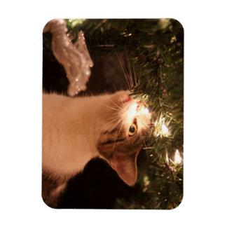 Ímã Gatos e luzes - gato do Natal - árvore de Natal