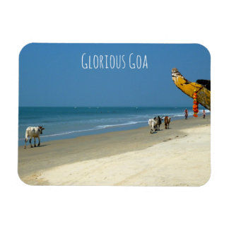 Ímã Goa glorioso - vacas na praia em Goa sul