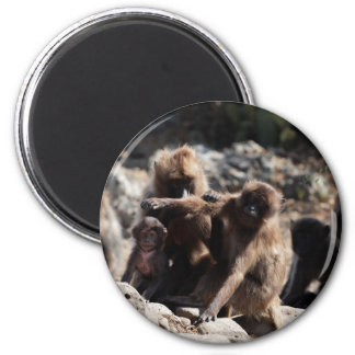 Imã Grupo de babuínos do gelada (gelada de