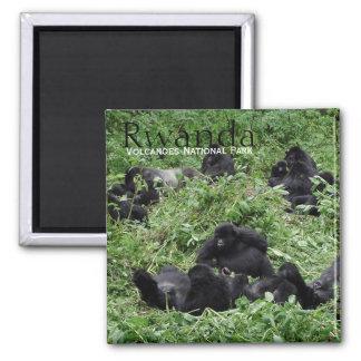 Imã Grupo do gorila de montanha no ímã do texto de