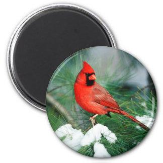 Imã Homem cardinal do norte na árvore, IL