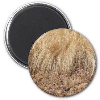 Imã iDetail de um campo do teff durante a colheita