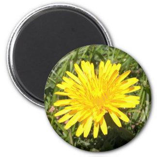 Imã Ímã amarelo da foto da natureza da flor do