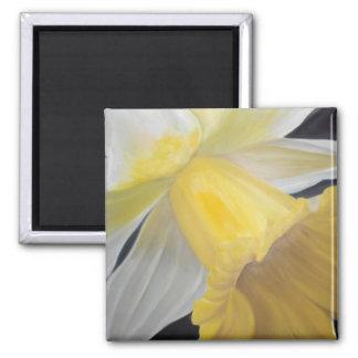 Imã Ímã amarelo do quadrado do Daffodil