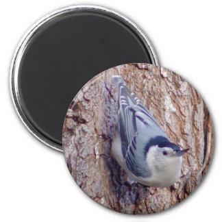 Imã Ímã bonito do pássaro do pica-pau-cinzento