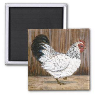 Imã Ímã branco da galinha