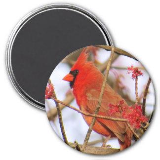 Imã Ímã cardinal